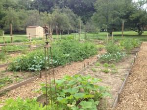 Garden Aug 2013